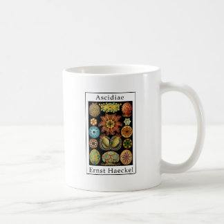 Ascidiae by Ernst Haeckel Coffee Mug