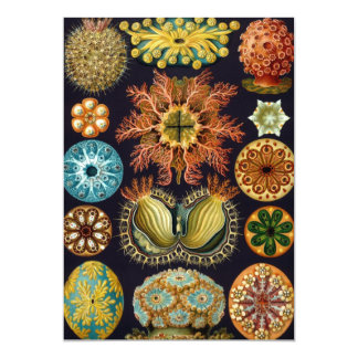 Ascidiae by Ernst Haeckel, Marine Invitations