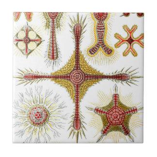 Ascidiae by Ernst Haeckel, Vintage Marine Animals Ceramic Tiles