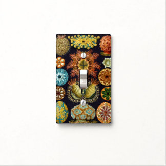 Ascidiae by Ernst Haeckel, Vintage Marine Animals Light Switch Cover
