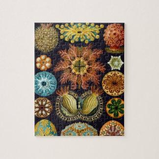 Ascidiae by Ernst Haeckel, Vintage Marine Animals Puzzles