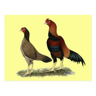 Aseel Wheaten Chickens Postcard