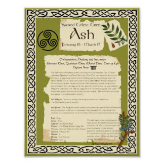 ASH CELTIC SACRED TREE POSTER