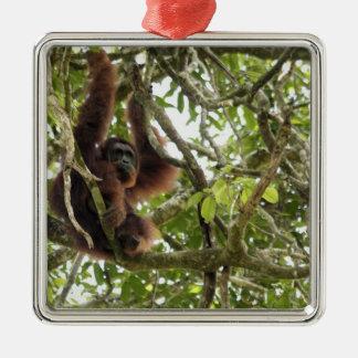 Asia, Borneo, Malaysia, Sarawak, Orangutan Metal Ornament