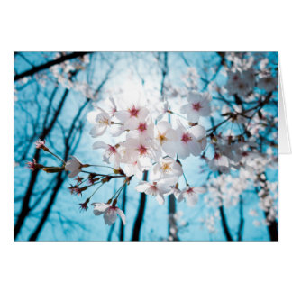 Asia Cherry Blossoms Card