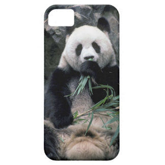 Asia, China, Chundu, Giant panda iPhone 5 Covers