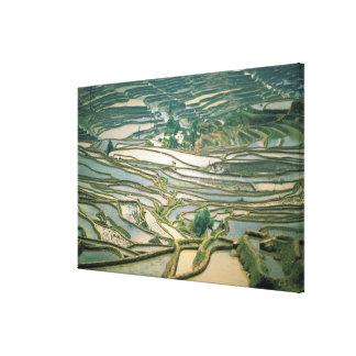 Asia, China. Flooded rice terraces near Nano Gallery Wrap Canvas