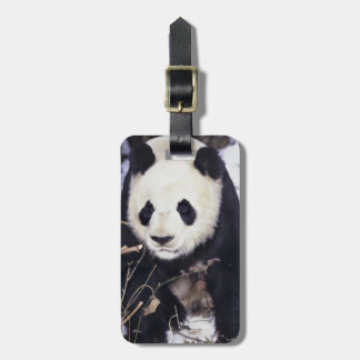 Asia, China, Sichuan Province. Giant Panda in 2 Travel Bag Tag