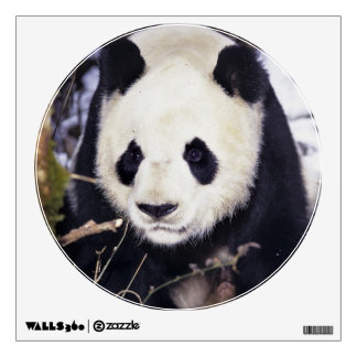 Asia, China, Sichuan Province. Giant Panda in 2 Wall Decal