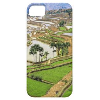 Asia, China, Yunnan, Honghe.  Rice terraces near iPhone 5 Cover