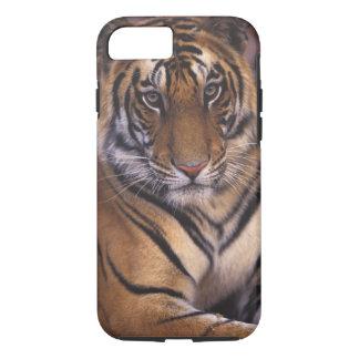 Asia, India, Bandhavgarth National Park, iPhone 7 Case