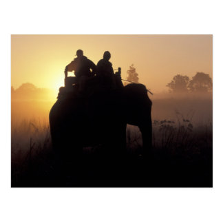 Asia, India, Kanha NP, Elephant safari Postcard