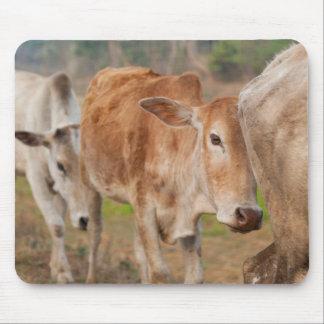 Asia, India, Meghalaya, Bajengdoba. Cattle Walk Mouse Pad