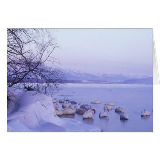 Asia, Japan, Hokkaido, Akan NP, Whopper Swans Greeting Card