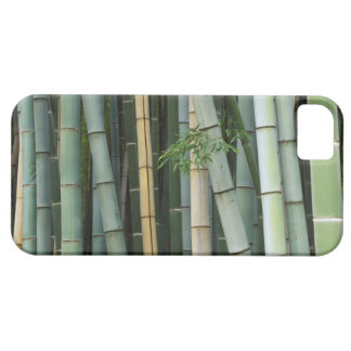 Asia, Japan, Kyoto, Arashiyama, Sagano, Bamboo iPhone 5 Cases