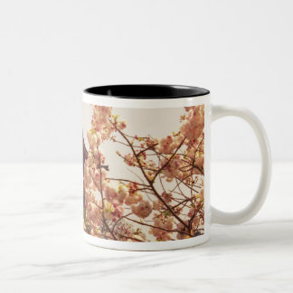 Asia, Japan, Kyoto, Kiyomizu temple in spring Two-Tone Coffee Mug