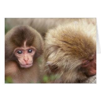 Asia, Japan, Nagano, Jigokudani, Snow Monkey 2 Card