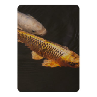 Asia Koi Fish Card