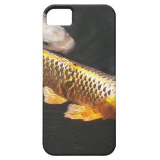 Asia Koi Fish iPhone 5 Covers