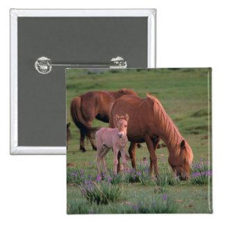 Asia, Mongolia, Gobi Desert. Wild Horses 2 Inch Square Button
