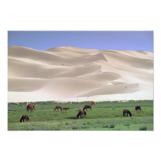 Asia, Mongolia, Gobi Desert. Wild horses. Art Photo