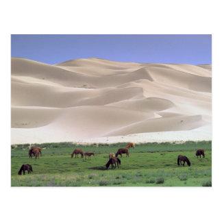 Asia, Mongolia, Gobi Desert. Wild horses. Postcard