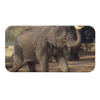 Asia, Thailand, Lampang Bowing with hat - Thai iPhone 4 Case-Mate Cases
