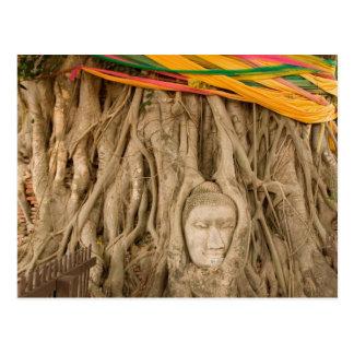 Asia, Thailand, Siam, Buddha in tree ruts at Postcard
