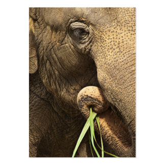 Asian Elephant - ACEO 10 Large Business Cards (Pack Of 100)