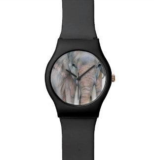 Asian Elephant Bull Watch