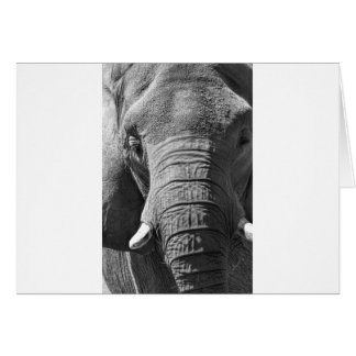 Asian Elephant in Black and White Card