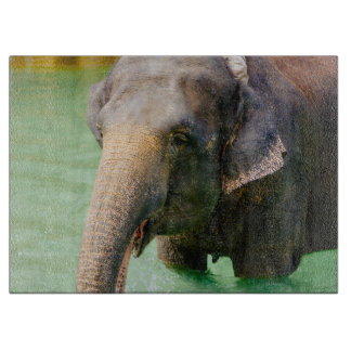 Asian Elephant In Green Water, Animal Photo Boards