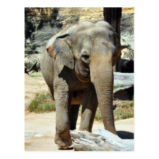 Asian Elephant Photograph Postcard