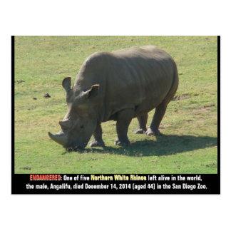 asian elephant postcard