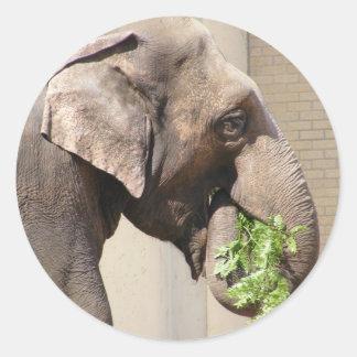 Asian Elephant Sticker