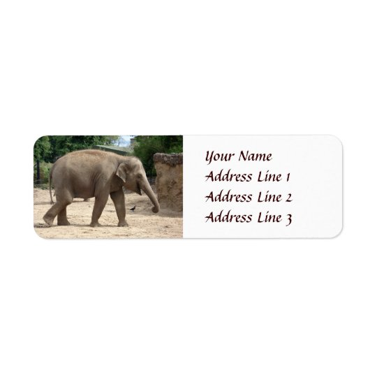 Asian Elephant Walking On Sand Return Address Return Address Label