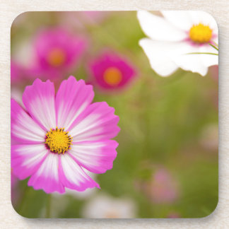 Asian flower coaster