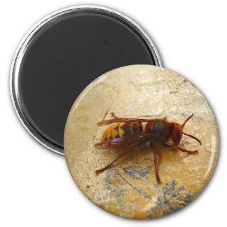 Asian Hornet Magnet