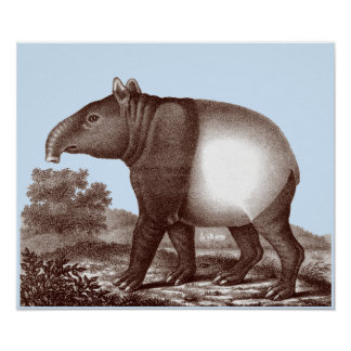 Asian Tapir - Changeable Background & Border Color Poster