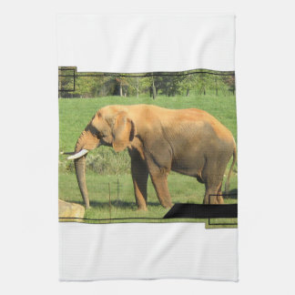 Asiatic Elephants Kitchen Towel