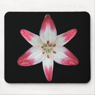 Asiatic Lily 'Lollipop' ~ mousepad