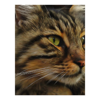 Aslan The Long Haired Tabby Cat Letterhead