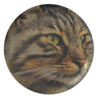 Aslan The Long Haired Tabby Cat Plate