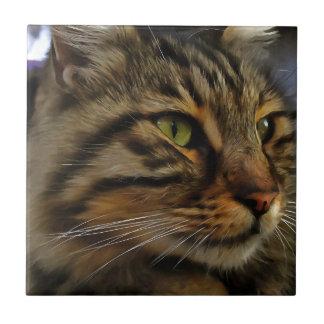 Aslan The Long Haired Tabby Cat Tile