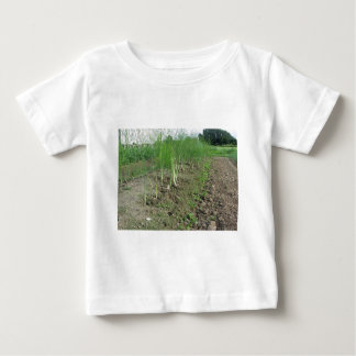 Asparagus shoot just before becoming woody baby T-Shirt