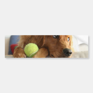ASPCA-Dog Bumper Sticker