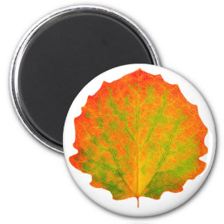 Aspen autumn leaf 2 inch round magnet