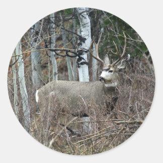 Aspen buck classic round sticker