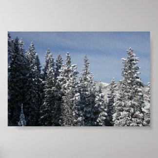 Aspen - Buttermilk Moutain tree tops Poster