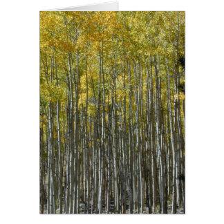 Aspen Grove card